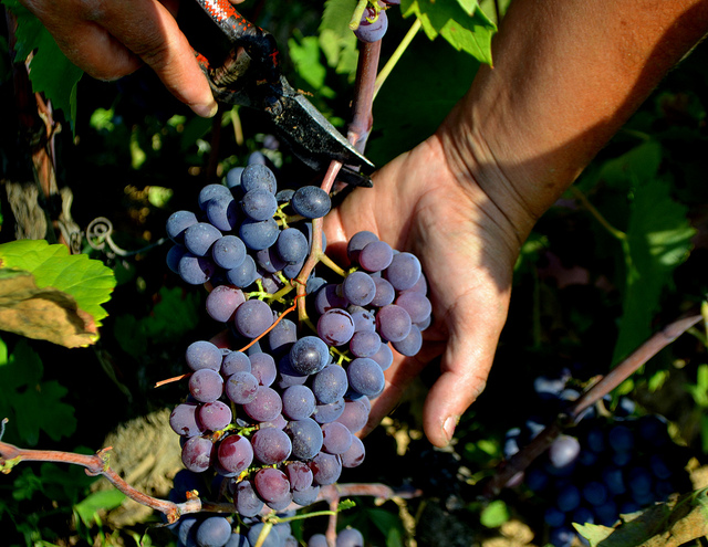 Fall Wine Club Collection: Rare and Indigenous Grapes